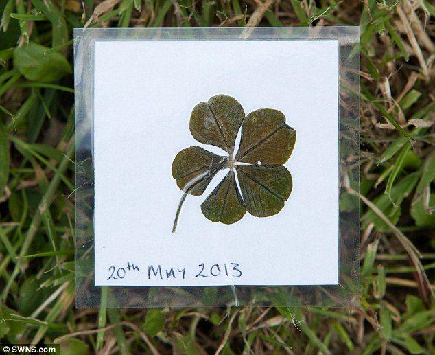 five_leaf_clover_2