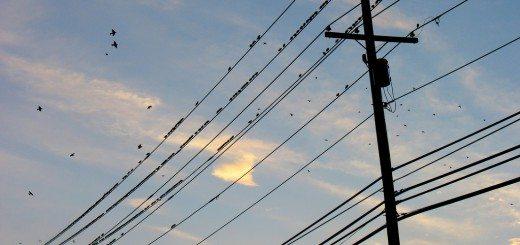 telephone-line