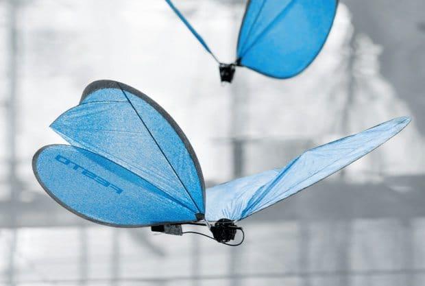 butterfly1-1427383149465