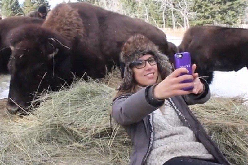 Bison Selfie