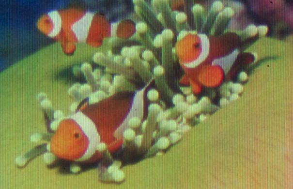 quantum dot image 1