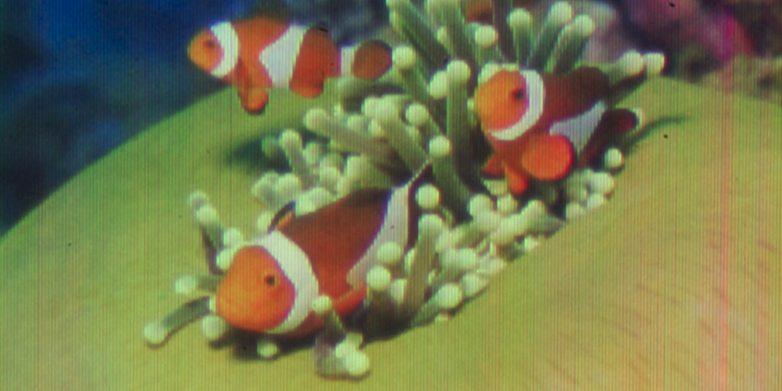 quantum dot image